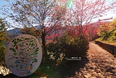 數碼天空-櫻:數碼天空山櫻17.jpg