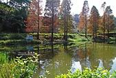 秋冬調色盤-落羽松:秋冬調色盤8.jpg