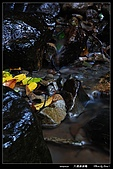 八連溪溪曝:DSC_4648