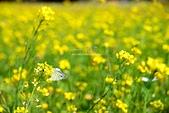 春喚~:春喚5.jpg