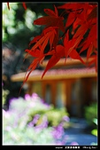 武陵農場:DSC_5092.jpg