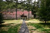 武陵-櫻姿花傳:武陵櫻花PO52.jpg