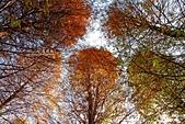 秋冬調色盤-落羽松:秋冬調色盤12.jpg