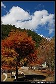 武陵農場:DSC_5129.jpg