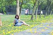 福爾摩沙之美:黃花風鈴木14.jpg