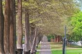 福爾摩沙之美:黃花風鈴木16.jpg