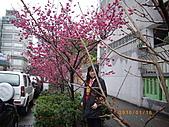 台中市北屯區-我現居住所在文昌國小:IMGP1047.JPG