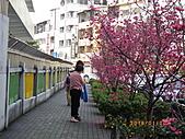 台中市北屯區-我現居住所在文昌國小:IMGP1151.JPG