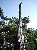 台中市北屯區大坑頭嵙山:IMGP2580.JPG