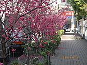 台中市北屯區-我現居住所在文昌國小:IMGP1153.JPG