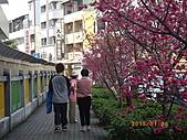 台中市北屯區-我現居住所在文昌國小:IMGP1152.JPG