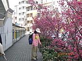 台中市北屯區-我現居住所在文昌國小:IMGP1147.JPG