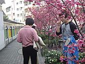 台中市北屯區-我現居住所在文昌國小:IMGP1149.JPG