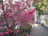 台中市北屯區-我現居住所在文昌國小:IMGP1154.JPG