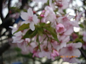 彰化縣芬園鄉花卉生產休憩園區:彰化縣芬園鄉花卉生產休憩園區