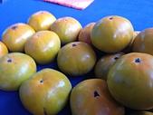 美國行:柿子.JPG