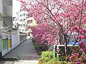 台中市北屯區-我現居住所在文昌國小:IMGP1143.JPG