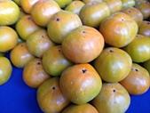 美國行:柿子2.JPG
