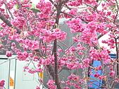 台中市北屯區-我現居住所在文昌國小:IMGP1146.JPG