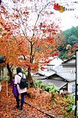 2016日本京都追紅葉:1121-113地上紅葉比樹上還多了.jpg