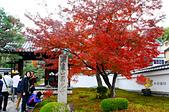 2016日本京都追紅葉:1121-054圓光寺門口一棵盛開的紅葉樹就讓大家拍開了.jpg