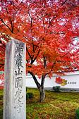 2016日本京都追紅葉:1121-055這棵盛開的紅葉樹真的好好拍.jpg