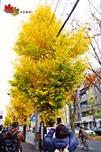 2016日本京都追紅葉:1121-046另一邊有一排頗黃的銀杏馬上引起大家搶拍.jpg