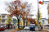 2016日本京都追紅葉:1121-045曼殊院道和白川通上的紅葉銀杏掉得差不多.jpg