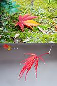 2016日本京都追紅葉:1121-053不同的紅葉樣貌.jpg