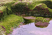 2015老梅綠石槽:TODO7931.jpg