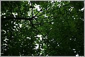 士林區之軍艦岩:20090402芝山岩梅子9586.JPG