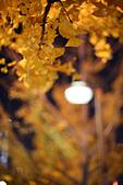 2014大阪車站:201411-TODO3349-大阪城.jpg