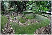 士林區之軍艦岩:20090402芝山岩洋蔥石9602.JPG
