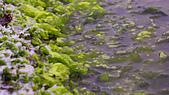 2015老梅綠石槽:TODO7925.jpg
