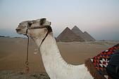 2005 埃及之旅:s0004