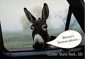 blog picture:donkey.jpg