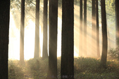 blog picture:挪威的森林