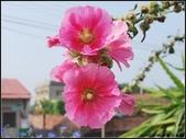 我的家人:媽媽的花