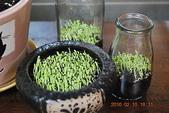豆豆盆栽:990210植栽 002.jpg