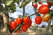 我的家人:採蕃茄趣