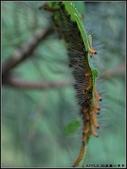 可愛動物:毛毛蟲