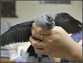 可愛動物:不速之鳥