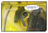 可愛動物:12.jpg