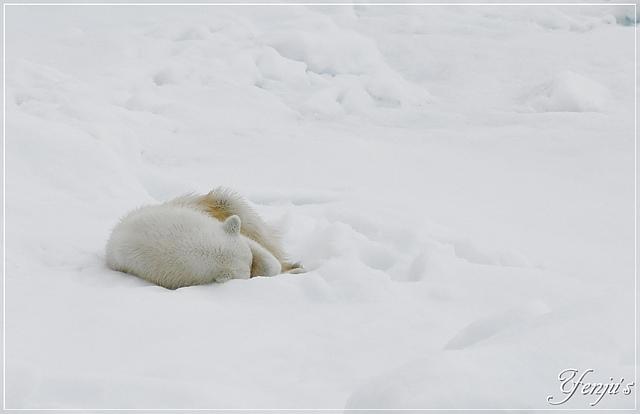 DSC_4731.JPG - 2019北極之旅航程中