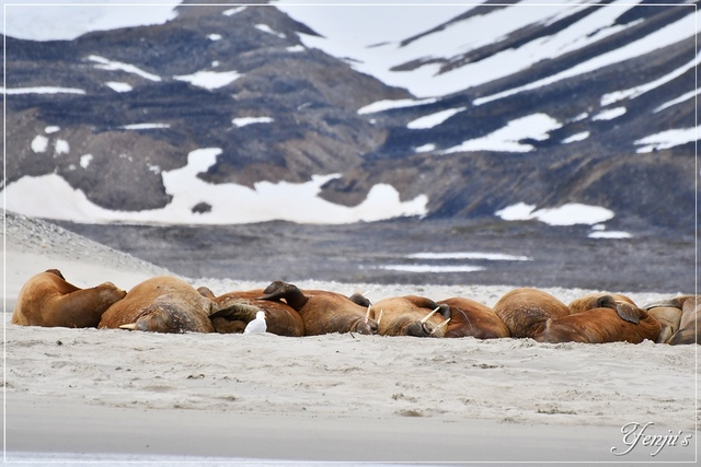 DSC_3198.JPG - 2019北極旅遊