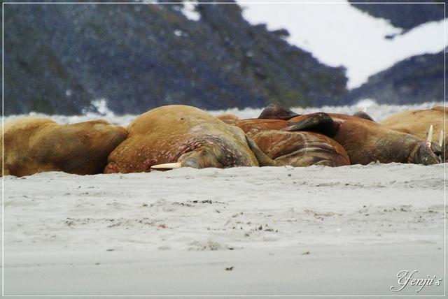 DSC_3249.JPG - 2019北極旅遊