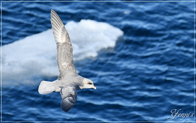 DSC_4381.JPG - 2019北極之旅航程中
