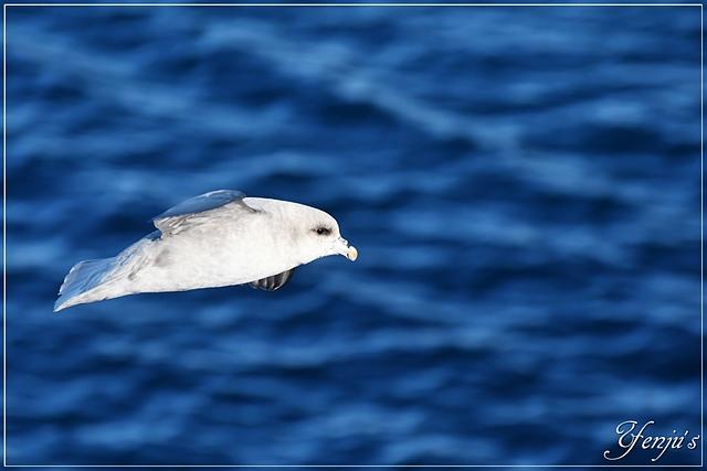 DSC_4394.JPG - 2019北極之旅航程中