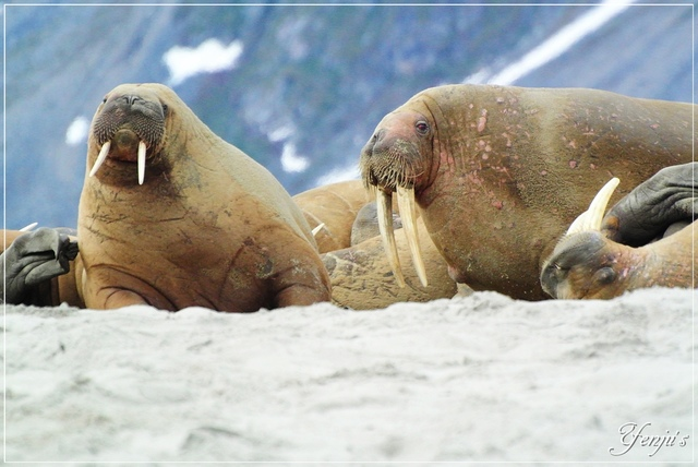 DSC_3344.JPG - 2019北極旅遊