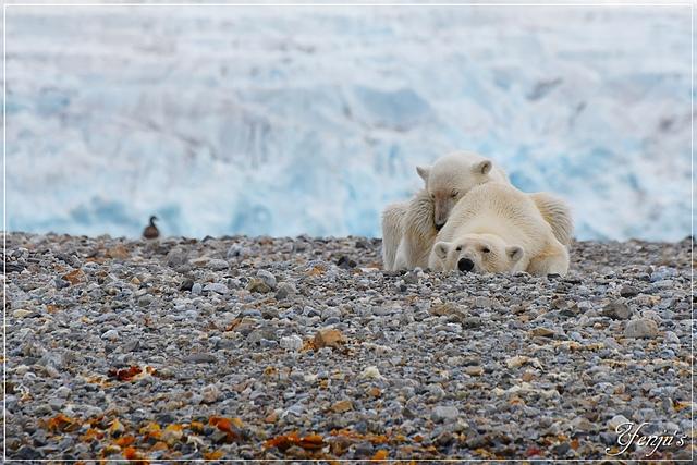 DSC_6894.JPG - 2019北極之旅航程中